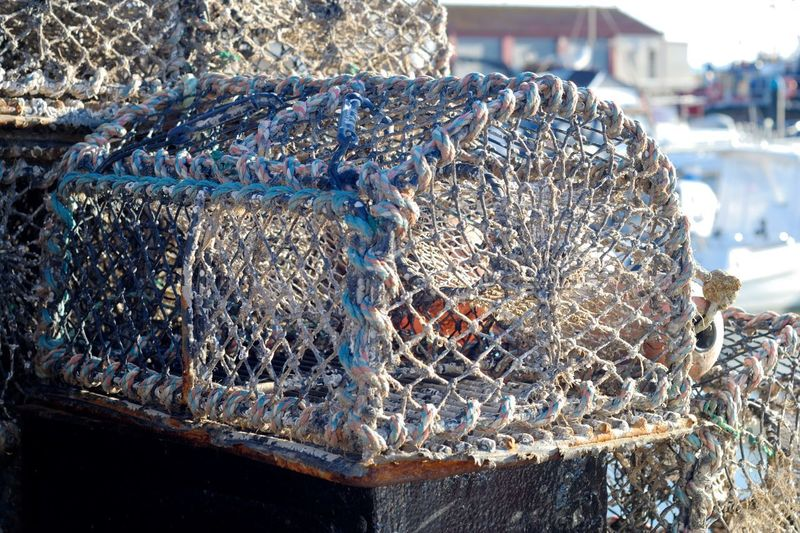 Creel Creel Nets Harbour Aluminum Close-up Day Fishing Equipment Fishing Industry Fishing Net Harbor Lobster Pots No People Outdoors