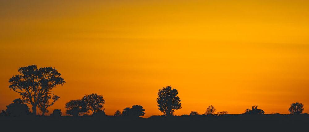 View of an orange sunset. Orange Silhouette Trees Beauty In Nature Horizon Idyllic Landscape Nature Orange Color Outdoors Scenics - Nature Silhouette Sky Sunset Tranquil Scene Tranquility Tree