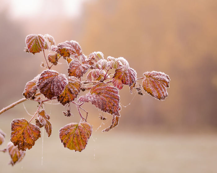 Autumn Autumn Colors Autumn Leaves Colors Eeyem Photography EyeEm Nature Lover Frost Nature Nature Photography Close-up Cold Frosty Frosty Mornings Leaf Leaves Macro Macro_collection Naturelovers Nautical Vessel Spiderweb Web