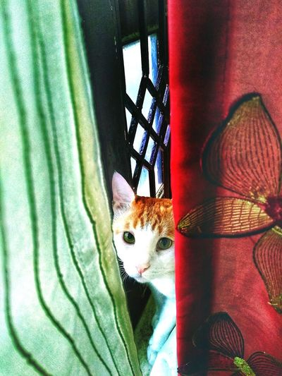 "The Animal Thought - ""maybe i've known you from past several life forms and still here I am sensing eternal verities of your presence again"". said the cat . Brown And White #cadbury Indoors  Green Color Green Eyes Domestic Cat No People One Animal"