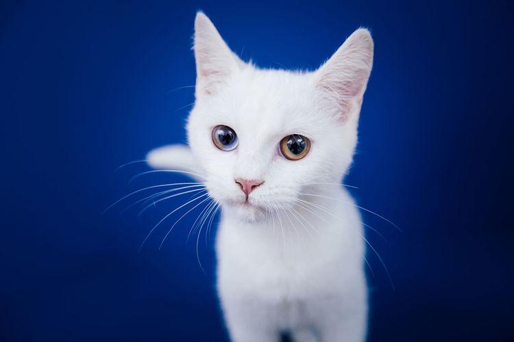 Close-up portrait of white cat against black background
