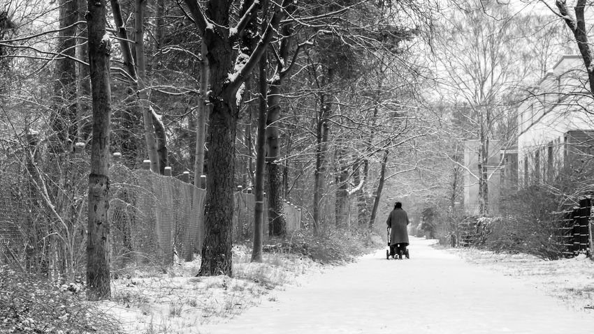 Berlin Photography Berliner Ansichten Black And White Cold Temperature Day Forest Full Length Growth Leisure Activity Lifestyles Men Nature One Man Only One Person Only Men Outdoors Park Real People Rear View Snow Tree Tree Trunk Walking Winter Zehlendorf Shades Of Winter