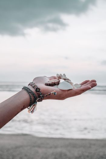 Cropped hand holding seashells at beach