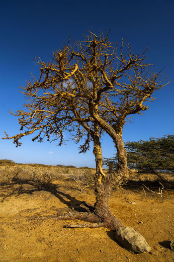 A leafless twisted tree in a barren landscape. Arid Day Dry Environment Hot Landscape Natural Nature Orange Outdoors Rocks Sand Scenery Scenic Scenics Sky Sunny Tourism Travel Tree View Waterless Weathered Wild Wilderness