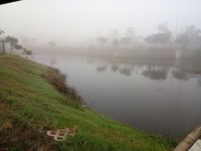 beauty of winter Shades Of Winter Early Mrng Fog Lake