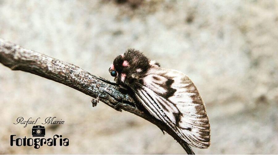 Mariposa esfinge rm_fotografia_1985 Animals In The Wild