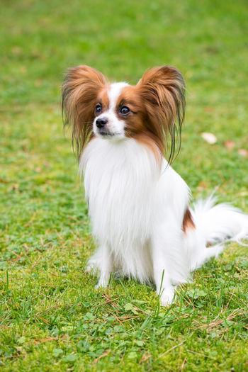 Portrait of a dog on field