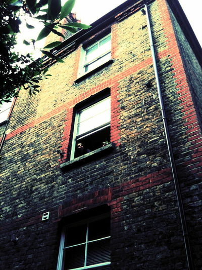 Highgate, London, August 2010 Tags: architecture, art, home, urban, cross process develop