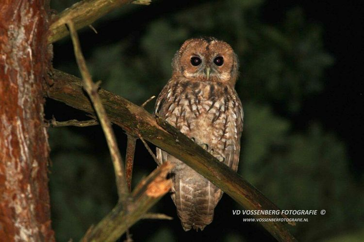 Owl on a branch. Owls Nature Nature Photography
