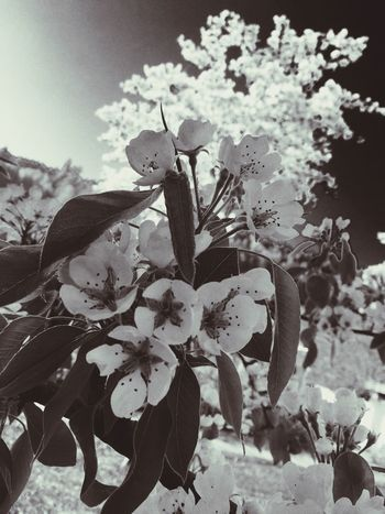 Blackandwhite Hello World Good Times Checking In Spring Spring Flowers