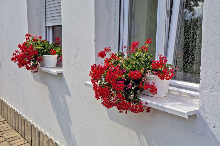 Red flower pot on window of building