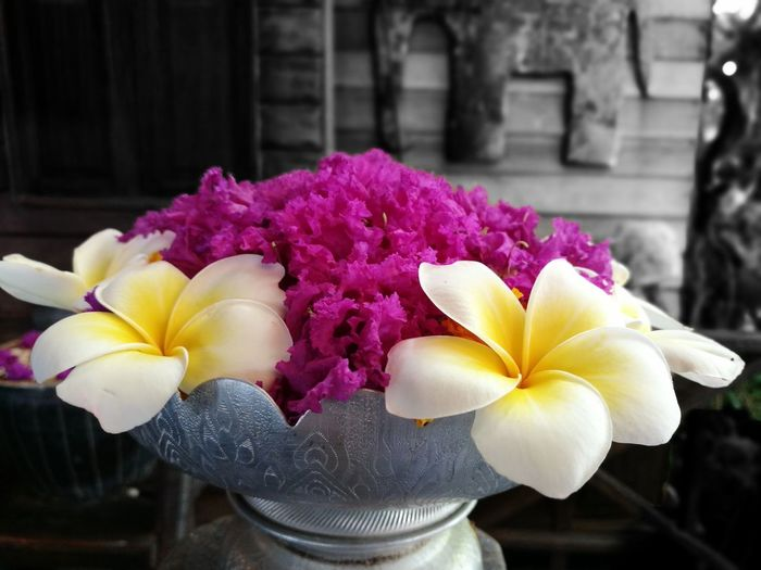 Flower Petal Flower Head Freshness Fragility Beauty In Nature Close-up Frangipani Orchid No People Nature Water Outdoors Day