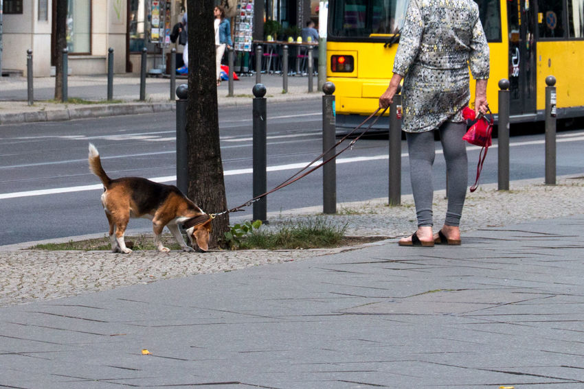 The Best Of Berlin Photographic Memory 06-12,June,2016 Animals Capture The Moment Colour Of Life Walking The Dog The Following Eyeemphoto Tram Legs People Snapshots Of Life Street Photography Walkin Th Dogs People Together Urban Exploration Morning Women Who Inspire You Low Section The Essence Of Summer Fashion Family Walking Around Beautiful Day Simple Moment Capture Berlin Fashion Stories Colour Your Horizn Stories From The City Urban Fashion Jungle