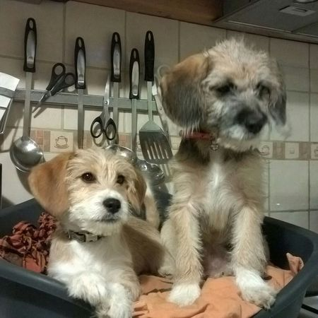 Joyce et Chaussette Chien Dog