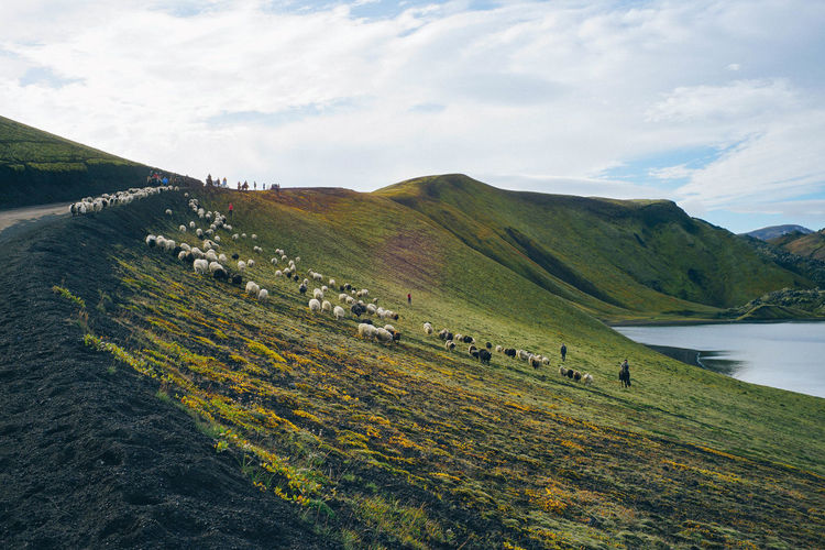 Scenics - Nature Sky Beauty In Nature Land Tranquil Scene Landscape Environment Tranquility Plant Cloud - Sky Grass Day Nature Green Color No People Mountain Non-urban Scene Field Rural Scene Outdoors Rolling Landscape Sheep🐑 Sheepdog