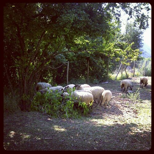 Obejas Corran Online  Paisaje animales naturaleza @chisspop