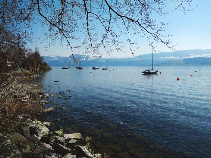 Mountain Lakezurich Water Tree Sea Blue Sky
