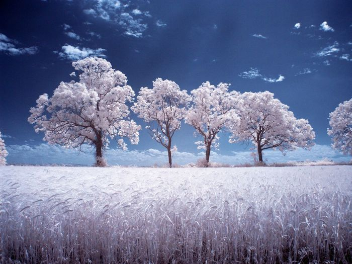 Took this today whilst out walking in the countryside. Walking Around Infrared Trees Landscape