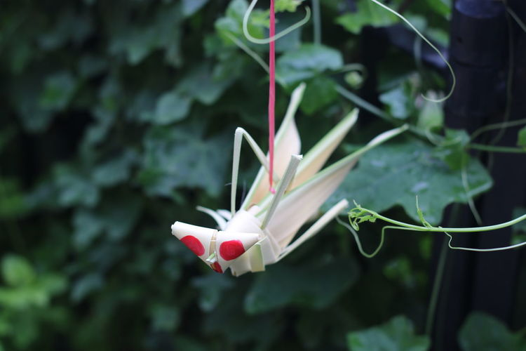 Close-up of white origami on plant