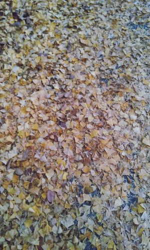 rake up fallen leaves ~~*_* /// 낙엽이 겁나 많아용 Hello World Feeling Thankful