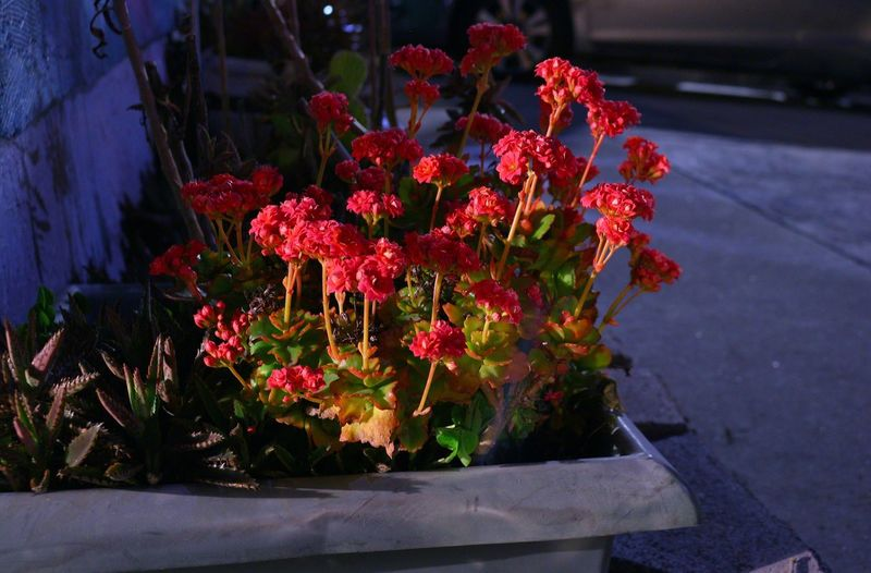 Beautiful flowers in the dark Flowers Nighttime Photography Home Is Where The Art Is