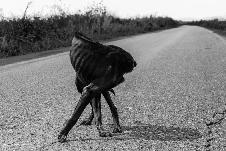 Stay Stay Dog Alone Lost Road Animal Themes Black And White Day Dog Domestic Animals Gaunt Help Homeless Mammal Nature No People One Animal Outdoors Pets Pitiable Sadness Starve