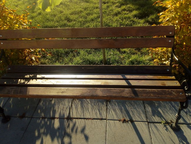 No People Day Outdoors Sunlight Nature Growth Tree benches