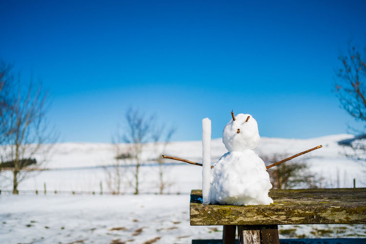 Snow Cold Temperature Winter Nature Blue Representation Sky White Color No People Day Art And Craft Tree Mammal Frozen Animal Representation Animal Focus On Foreground Creativity Plant Outdoors