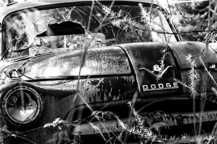 """If Only They Could Talk"" Series 1956 Dodge Truck Abandoned B&w Back In The Day Black And White Photography Classic Close-up Derelict Deterioration Dodge Focus On Foreground Headlight If Only They Could Talk Land Vehicle Mode Of Transport No People Old Outdoors Parked Plant Rusted Showcase April The Week On EyeEm Vintage Vintage Car The Drive"