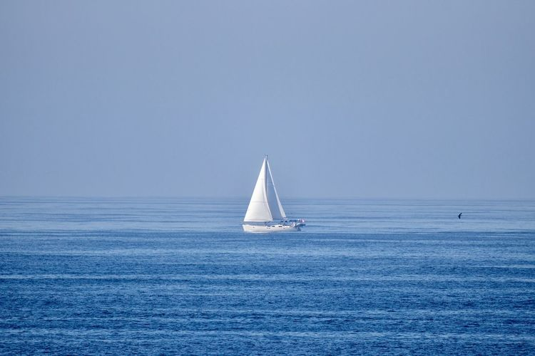 sailboat in the ocean Sea Water Horizon Over Water Sailboat Horizon Nautical Vessel Sky Scenics - Nature Sailing Mode Of Transportation Waterfront Beauty In Nature Transportation Copy Space Clear Sky Tranquil Scene Blue Nature Tranquility No People Outdoors Yachting Yacht Luxury