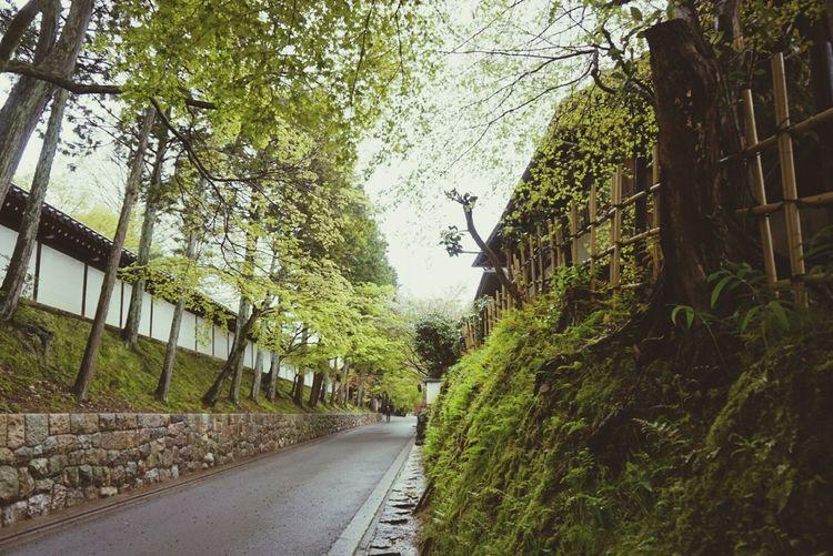 Relaxing Taking Photos Hello World Japan Kyoto Sightseeing Beautiful Heritage Green