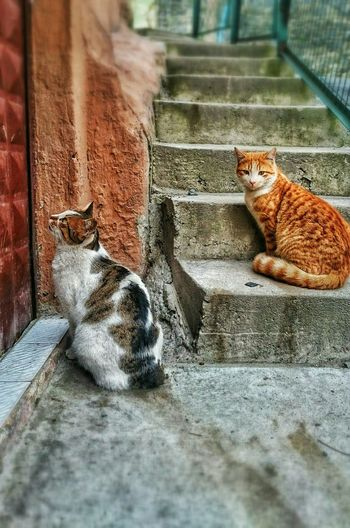 Cat Cat Lovers Animals Hungry Cat Street Photography Mondaymorning Happy Monday