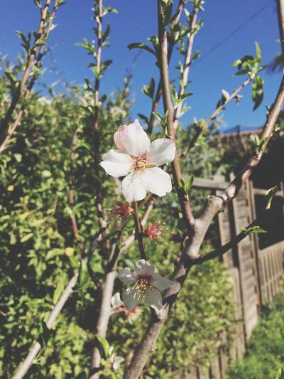 Le Printemps Comeback Fleurs Amandier Jardin Garden