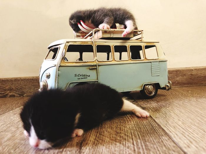 Newborn Kitten Mammal One Animal Pets Domestic Domestic Animals Mode Of Transportation Transportation Cat Car