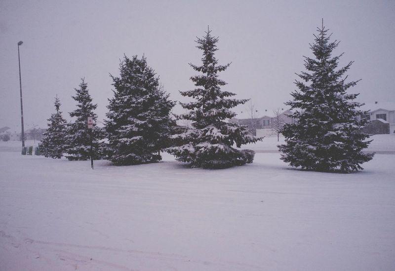 January 7, 2016 QVHoughPhoto FujiFilmX100 Fargo Northdakota Trees Snow Winter MidWest Fresh1 Cityscapes