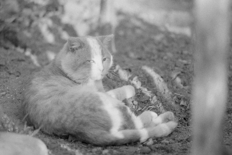 Glum russian cats p. 4 35mm Film CHM Universal 100 Black And White Cat Film Photography Helios 44-2 58mm F2