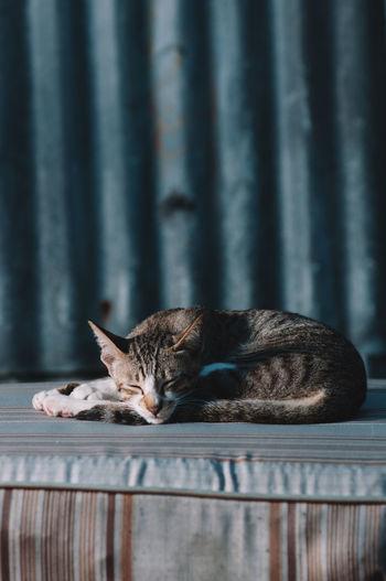Sleeping cat Animal Themes Cat Domestic Animals Domestic Cat Indoors  Mammal Night No People One Animal Pets Sleeping