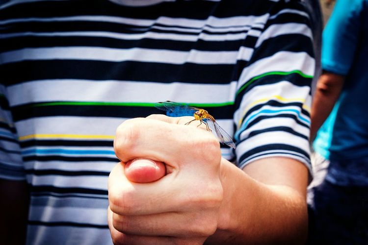 Midsection of boy holding dragonfly