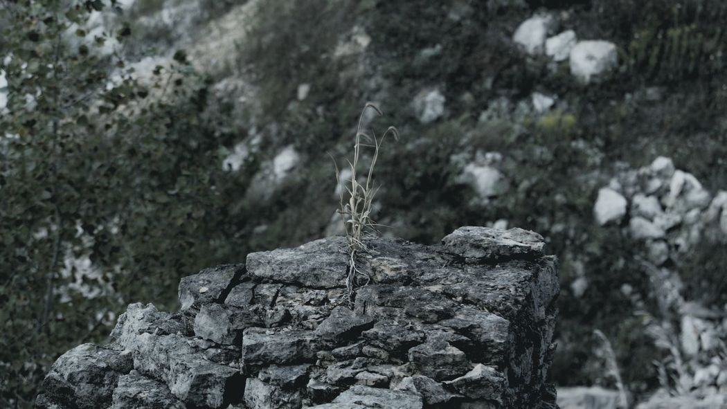 Rocky Indiana Abyss Dead Plant Lonely Stone Rock Clift Awesome Cool Pic