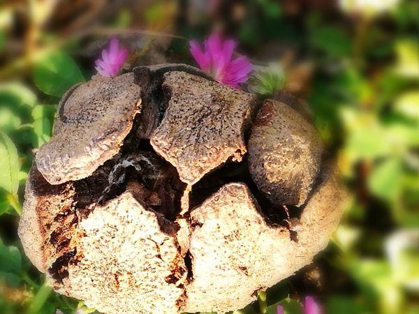 Flower Close-up Plant