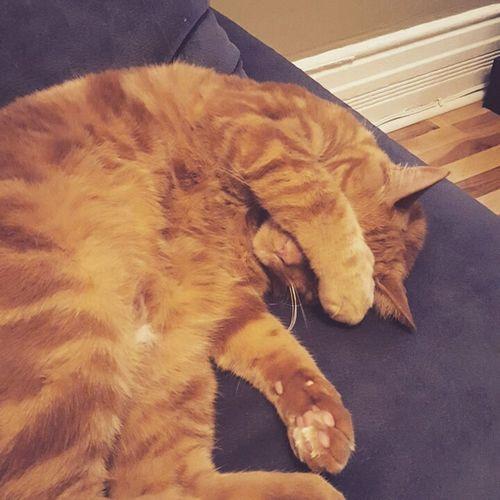 Sleepy cat Feline Cat Pets Sleepy Sleeping Beauty Animal Themes One Animal Domestic Animals First Eyeem Photo EyeEmNewHere