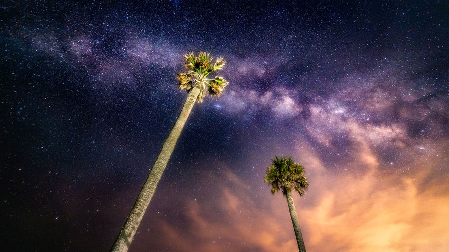 Low angle view of palm tree against sky and milkyway at night