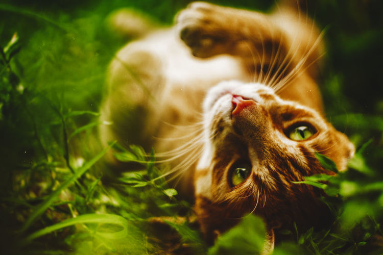 20170706 - Relax Animal Themes Cat Cat Lovers Cat Photography Catlovers Catoftheday Cats Cats Of EyeEm Cats 🐱 Catsagram Catsofinstagram Cat♡ Close-up Day Domestic Animals Domestic Cat Feline Grass Green Color Mammal Nature No People One Animal Outdoors Pets