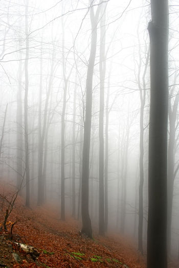 fog Autumn Bare Tree Beauty In Nature Branch Cold December Fog Foggy Forest Grey Growth Here Belongs To Me Idyllic Landscape Mist Nature No Animals No People Non-urban Scene Things I Like Tree Tree Trunk Weather Winter WoodLand