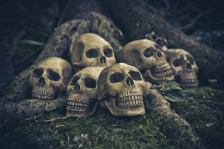 Skull with still life on the roots abstract concept in the halloween day