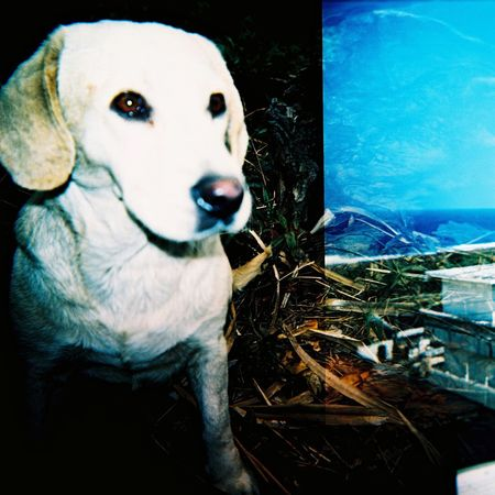 Aboriginal Land Lomography Tao  Animal Animal Body Part Animal Head  Animal Themes Auto Post Production Filter Canine Close-up Day Dog Domestic Domestic Animals Focus On Foreground Looking Looking At Camera Mammal No People One Animal Outdoors Pets Portrait Vertebrate