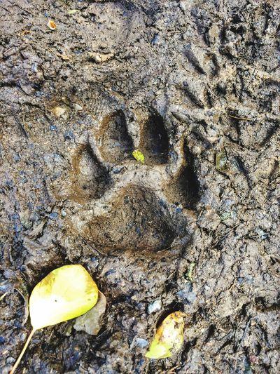 Dog Dogslife Dogstagram EnglishCounrtyside Dogs Of EyeEm Naturelovers Walking The Dog Mud Muddy Muddypaws Paws Pawprints