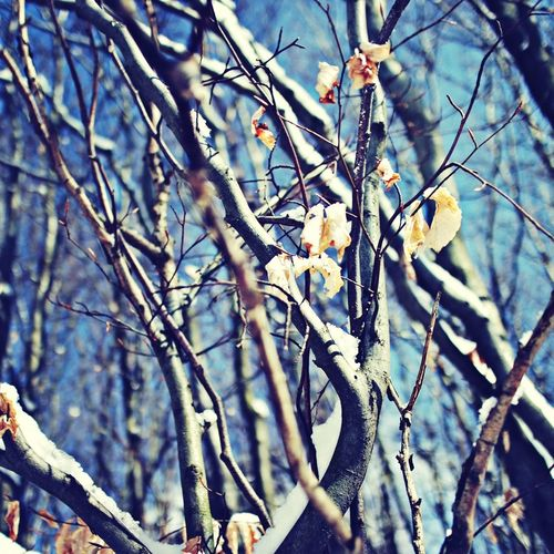 Close-up of bare branches