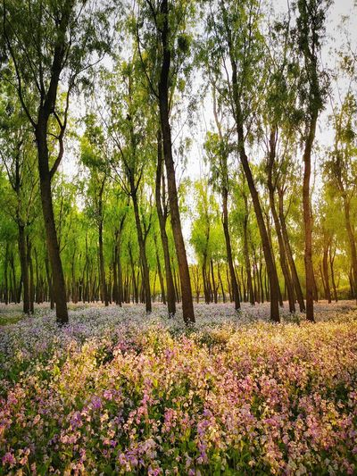 Scenic view of flowering trees in forest
