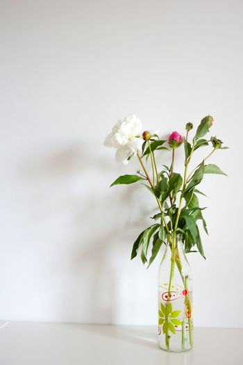 Rescued flowers in milk bottle. Home Sony A6000 Flowers Arrangement Indoors  Interior Design White White Album Negative Space Still Life From My Point Of View Hello World Simplicity Minimalism The Week Of Eyeem Open Edit Home Sweet Home Flower Peony  Fine Art Photography Home Is Where The Art Is Interior Style